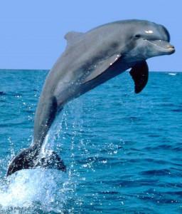Дельфины Доклад
