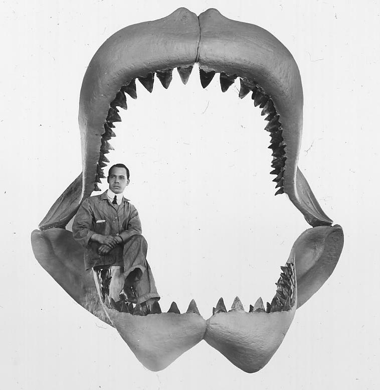 челюсти мегалодона