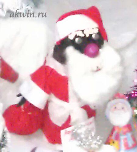 Поделка Дед Мороз из валенка или африканский Дед Мороз