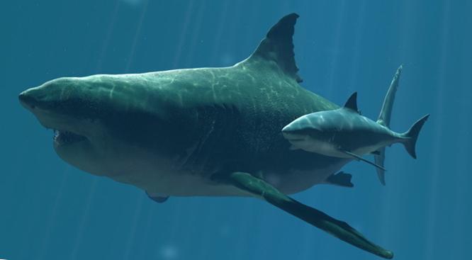 мегалодон в сравнении с белой акулой