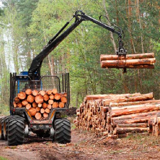 Проблемы и перспективы лесной промышленности Доклад по географии 9 класс